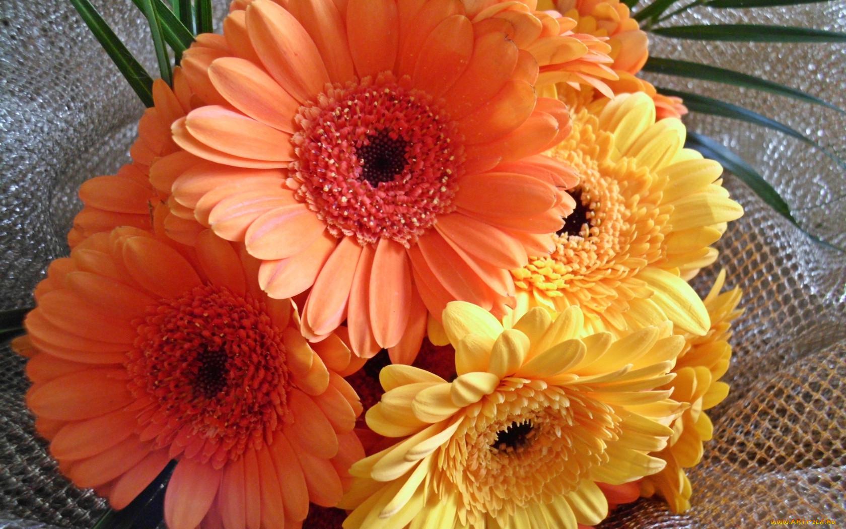 Осенние фото с цветами